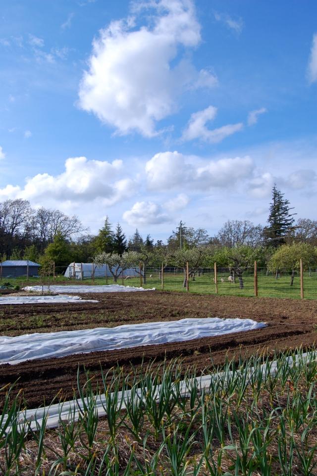 Le jardin potager bio d'Alex et Virginie