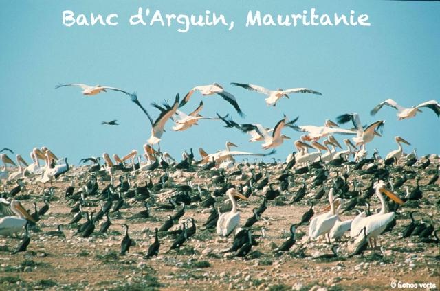 Banc d'Arguin Mauritanie échos verts