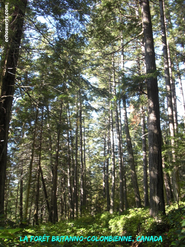 Forêt britanno-colombienne- Canada- Échos verts