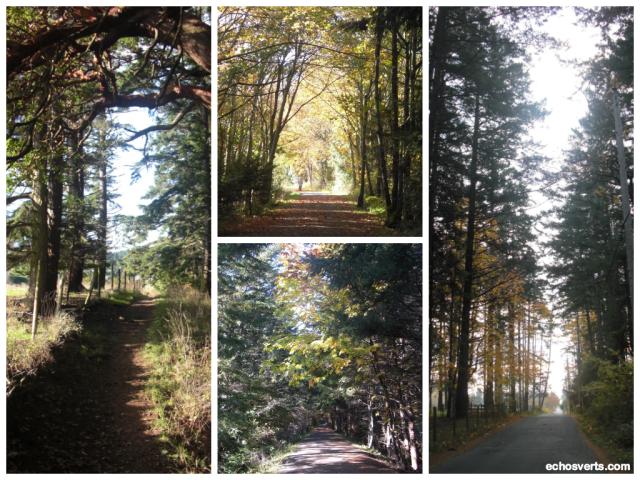Chemins boisés- Ile de Vancouver- copyright- échos verts
