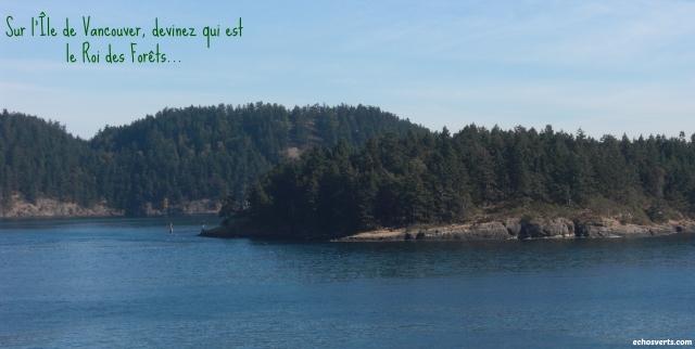 Le Roi des forêts- Ile de Vancouver- copyright- échos verts.jpg