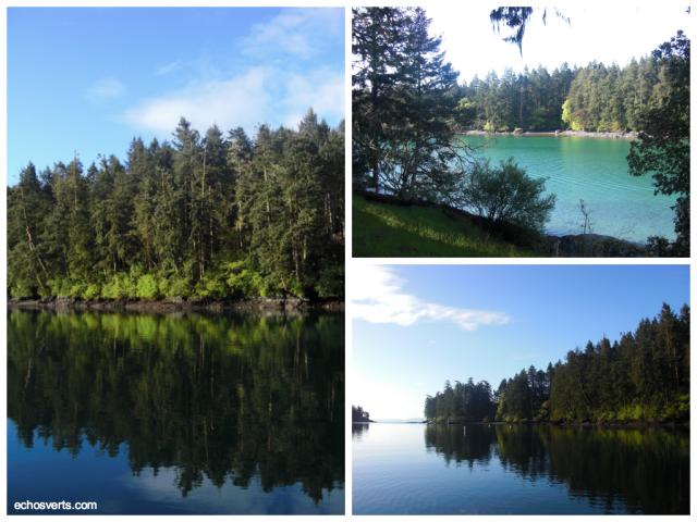 Sapins- Ile de Vancouver- Copyright- échos verts