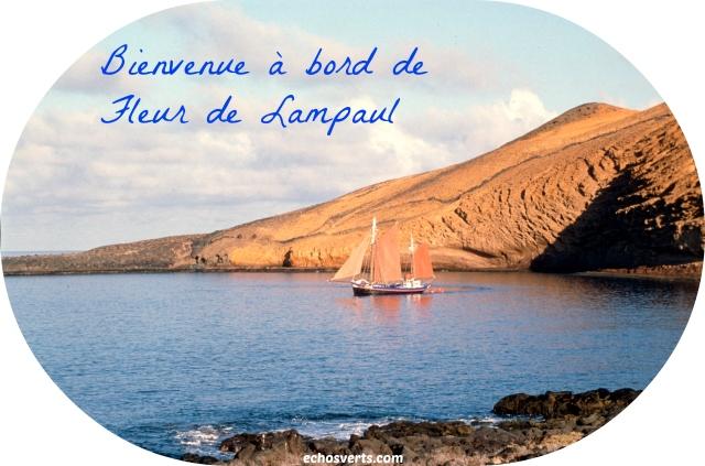 Fleur de Lampaul- Canaries- copyright- échos verts