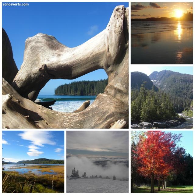 Ile de Vancouver- copyright- échos verts