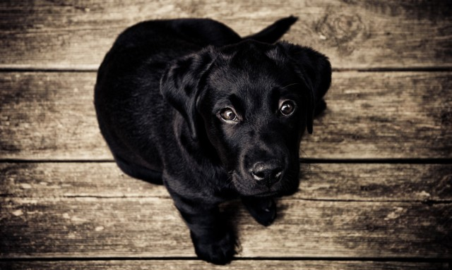 chien noir- source- pexels