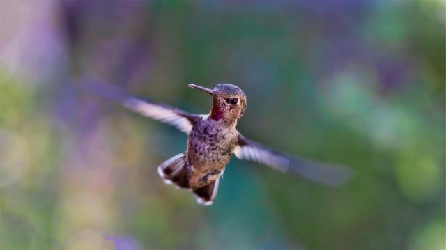 Colibri- source- pexels