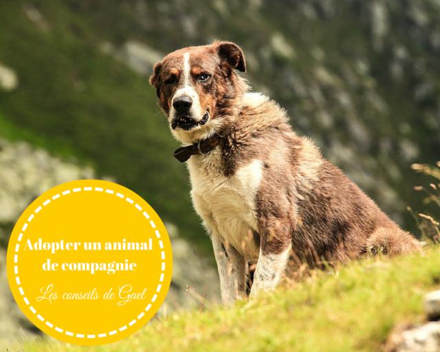 Adopter un animalde compagnie -les