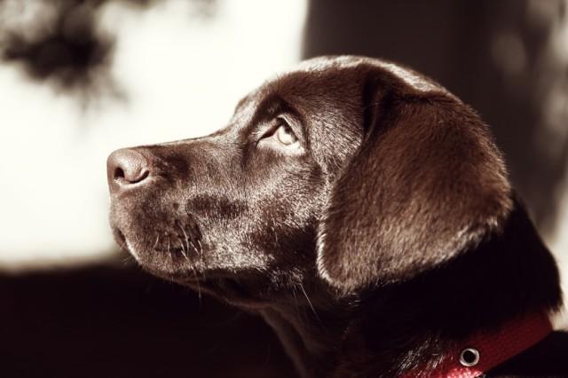 animal-coat-dog-587-825x550