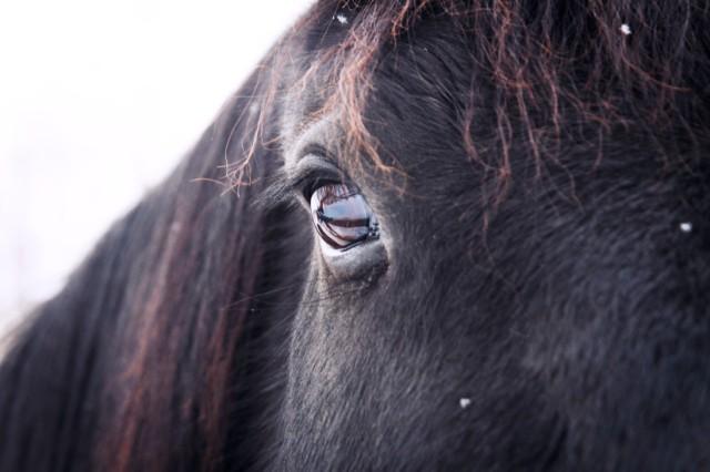 animal-eye-horse-1027-825x550