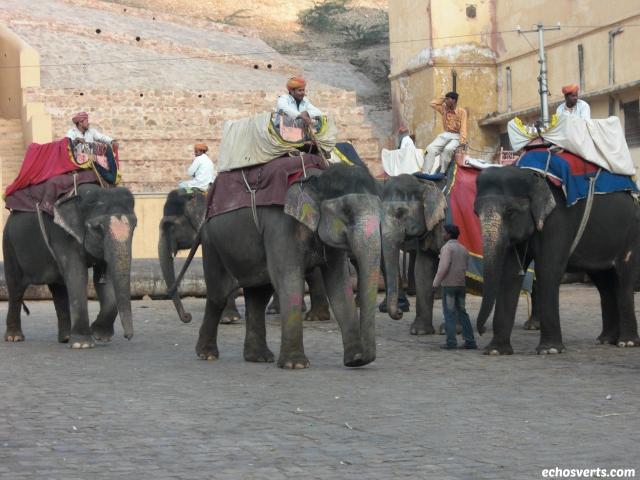 éléphants amber inde- echosverts.com
