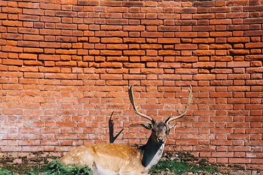 deer source pexels