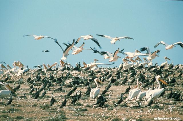 oiseaux- echosverts.com