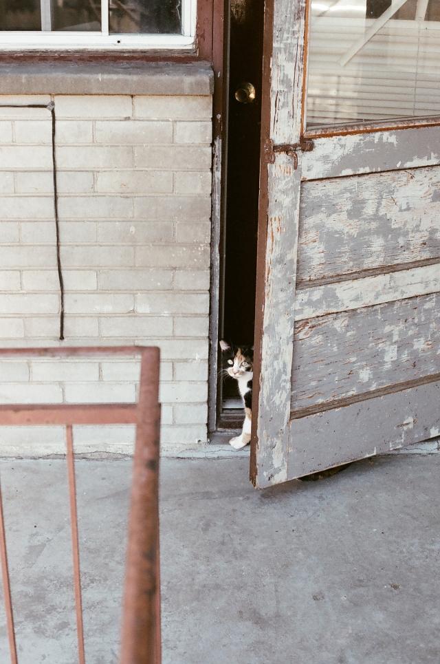 2014-10-Life-of-Pix-free-stock-photos-cat-door-entrance-look-Alexis-Doyen