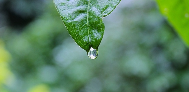 nature-plant-leaf-rain-large