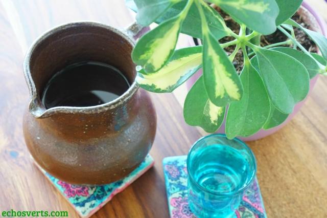 Plante et pichet d'eau- echosverts.com