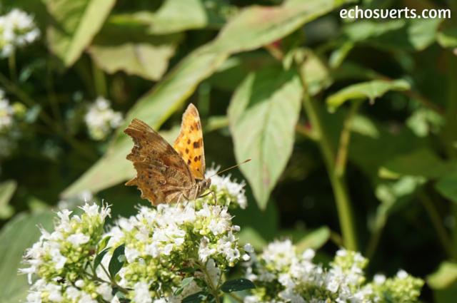 Se ressourcer en plein air papillon echosverts.com