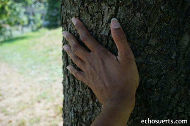 se ressourcer en plein air enlacer un arbre echosverts.com
