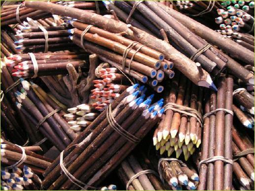 Crayon en branche de l'Ile aux crayons