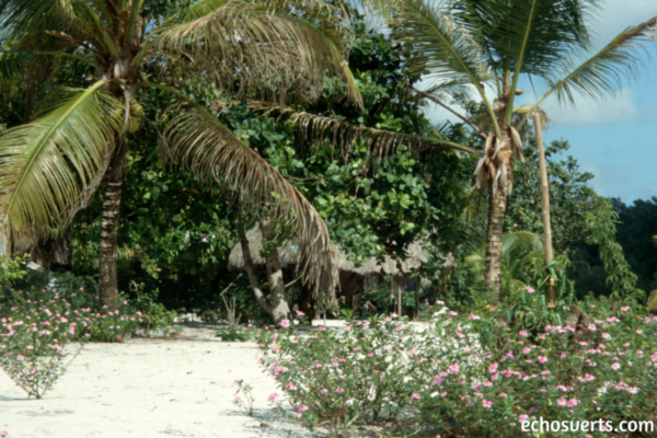 Guyane Française- Fleuve Maroni- echosverts.com